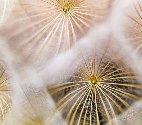 Close up of flowers that has fragile silk looking particles