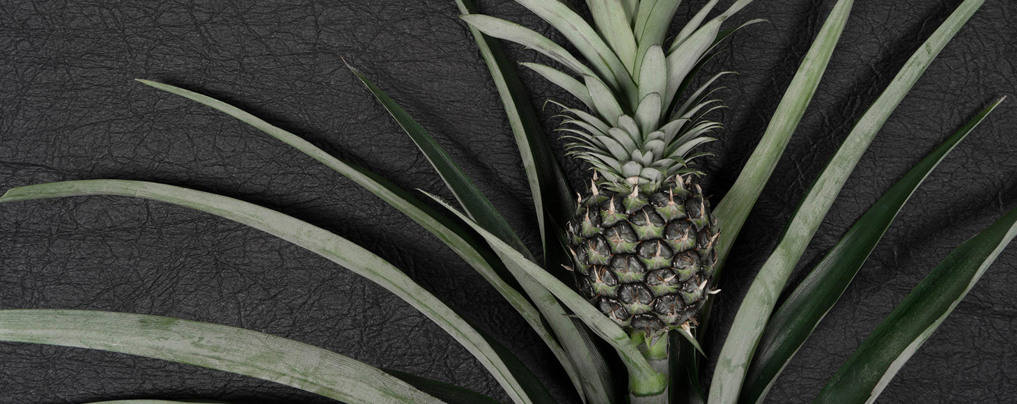 Piñatex® is a natural alternative to leather, made out of pineapple leaves waste.